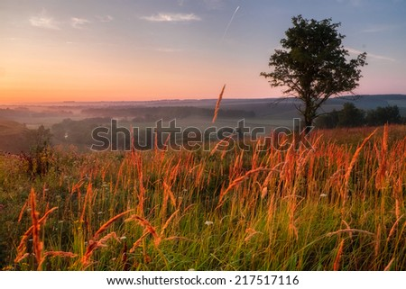 Beautiful morning landscape with sunlight and fields covered by flowers in Russia - stock photo