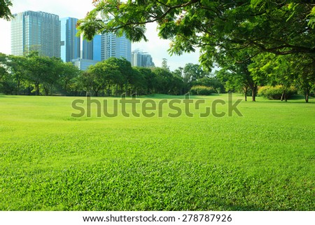 beautiful morning light in public park with  grass field and  green environment use as background,backdrop - stock photo
