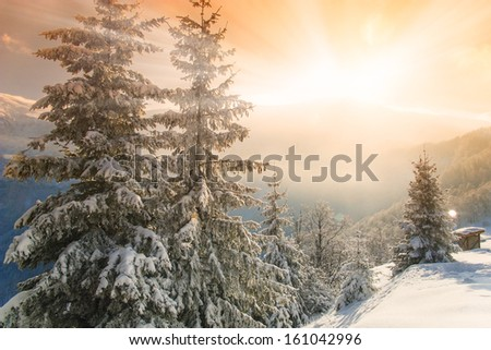 Beautiful morning light shining over mountain tops and pine trees covered with snow - stock photo
