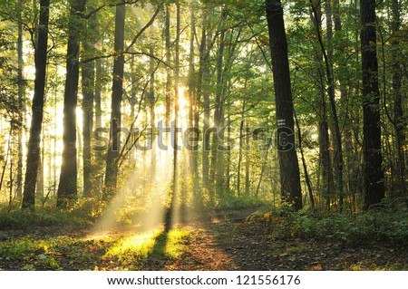 Beautiful morning scene in the forest with sun rays and long shadows - stock photo