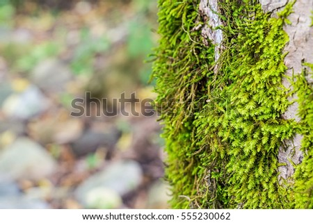 Beautiful moss and lichen covered wood