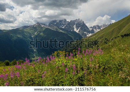 Beautiful mountain landscape with flower meadow - stock photo