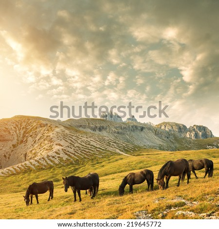 Beautiful mountain landscape with horses in the foreground