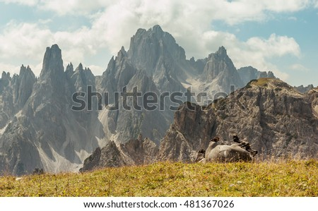Beautiful mountain landscape with horses in the foreground, horse rolling around in the grass