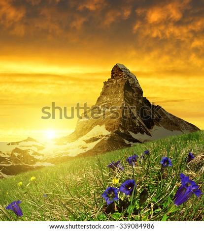 Beautiful mountain Matterhorn in the foreground blooming gentian at sunset, Pennine Alps, Switzerland - stock photo