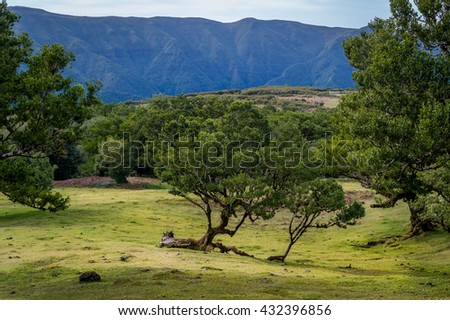 Beautiful mountain plateau with Fanal old forest and blue mountain range on the background. Madeira island landscapes, Portugal.