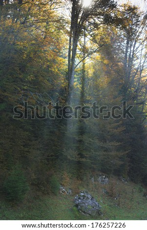 Beautiful mountain scenery and autumn foliage in the Alps