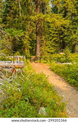Beautiful Mountain Trail. Manning Park in British Columbia. Canada.