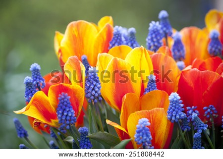 Beautiful multiflowers bed in garden, Holland - stock photo