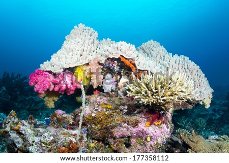 Beautiful mushroom shaped coral head with pretty pink soft corals, staghorn corals and an ecosystem of many tropical animals.Image shot in Fiji.