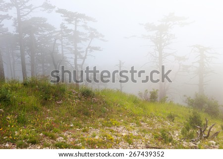 Beautiful mysterious foggy forest under dull sky with green grass and flowers on the ground and snag on foreground - stock photo