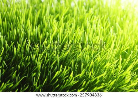 Beautiful natural background with fresh spring grass - stock photo