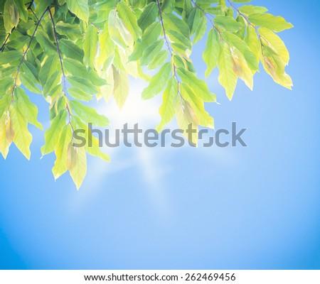 Beautiful nature background - stock photo