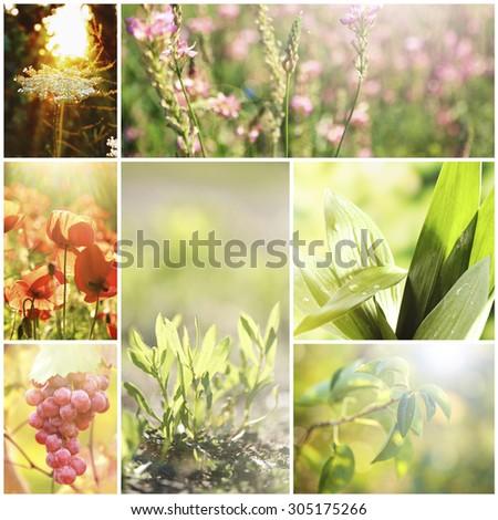 Beautiful nature collage - stock photo