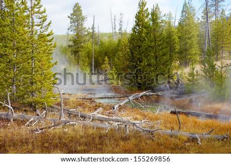 Beautiful nature in Yellowstone National Park, Wyoming - stock photo