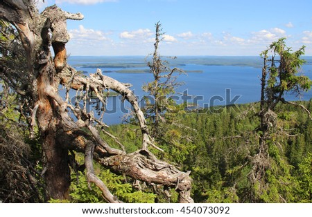 Beautiful nature of national park Koli, Finland - stock photo