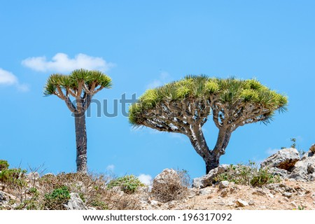 Beautiful nature of the Socotra Island, Yemen