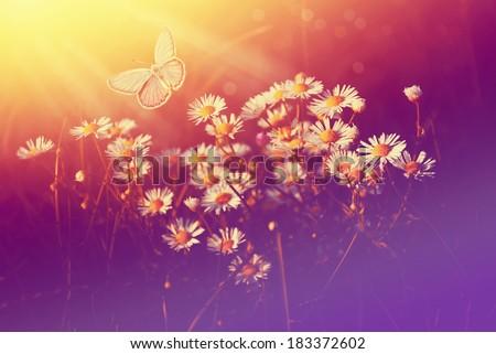 Beautiful Nature Scene - stock photo
