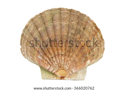 Beautiful ocean clam shell isolated on a white background - stock photo