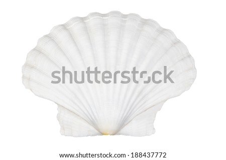 Beautiful ocean shell isolated on white background