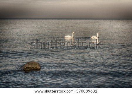 Beautiful ocean sunset in the baltic sea, stones and two swans