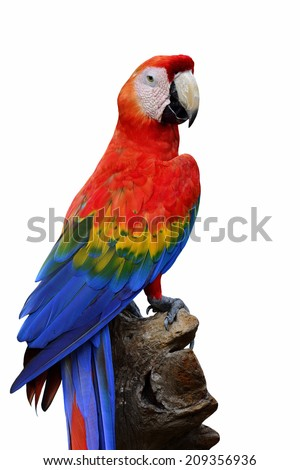Beautiful of half length Scarlet Macaw bird isolated on white background