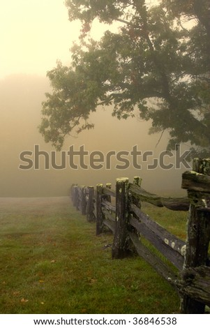 Beautiful old split rail fence and tree in foggy morning light in Blue Ridge Mountains in Autumn.