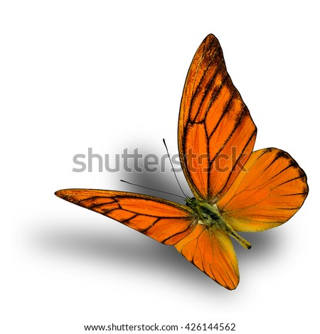 Beautiful Orange Albatross butterfly upper wing part isolated on white background with soft shadow beneath - stock photo