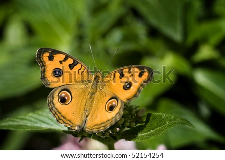 Beautiful orange butterfly collecting pollen on flower in sunlight - stock photo