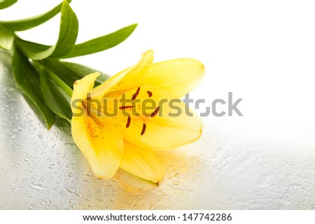 Beautiful orange lilies on wet background