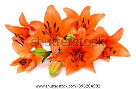 Beautiful orange lily flowers bouquet isolated on white background - stock photo