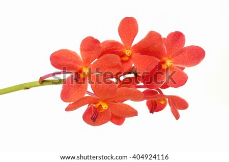 beautiful orange orchid close up isolated - stock photo