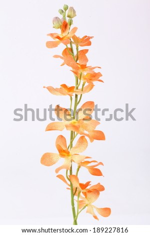 Beautiful orange orchid on a white background - stock photo