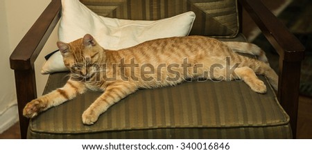 Beautiful orange Tabby kitty cat stretched out on chair sleeping - striped like a tiger - stock photo