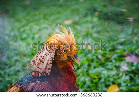 Beautiful orange tropical bird with luxury plumage on the green grass background, bright and clean colors - stock photo