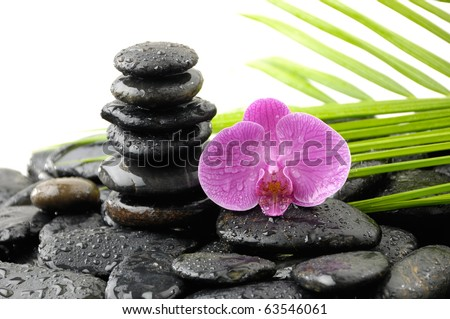 Beautiful orchid and black stones