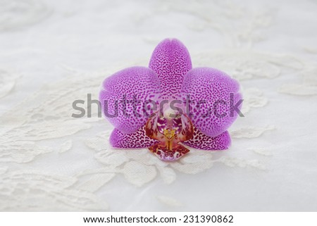 Beautiful orchid and lace texture - stock photo