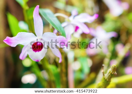 Beautiful orchid flower at the Soroa Orchid Botanical Garden in Cuba - stock photo
