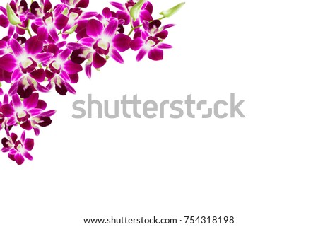 Beautiful Orchid Flower Frame On White Stock Photo & Image (Royalty ...