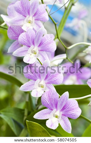 Beautiful orchid flower over blur background - stock photo