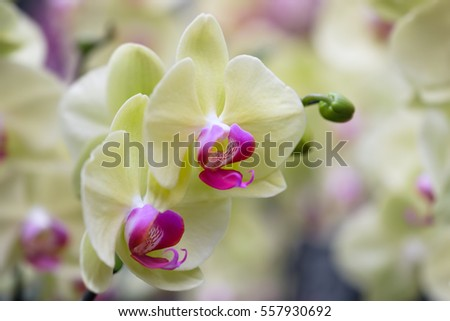 Beautiful orchid flower with natural background, Select the focus and blur.