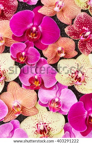 Beautiful orchid flowers on black stones - stock photo
