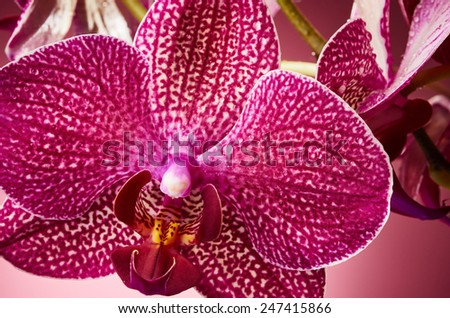 Beautiful orchid flowers on pink background - stock photo