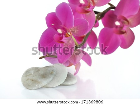 beautiful orchid next to a stone heart on white background