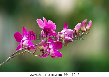 beautiful orchid on green background - stock photo