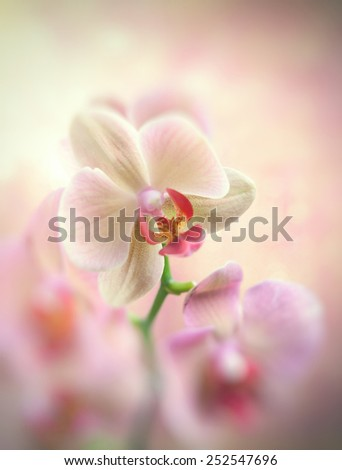 Beautiful orchid on light color background - stock photo
