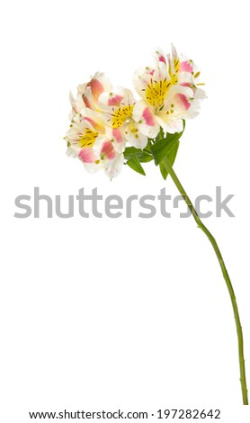 Beautiful orchid stem Closeuup flowers. - stock photo