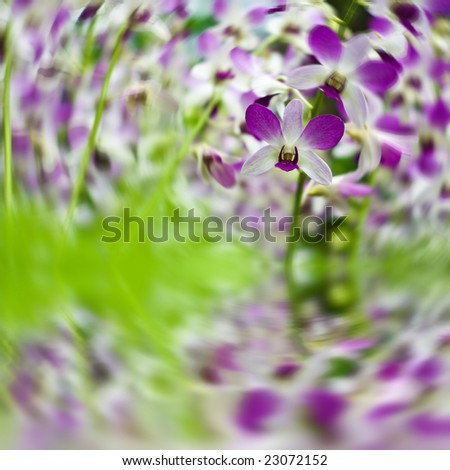 beautiful orchids outdoors with reflection partly blurred - stock photo