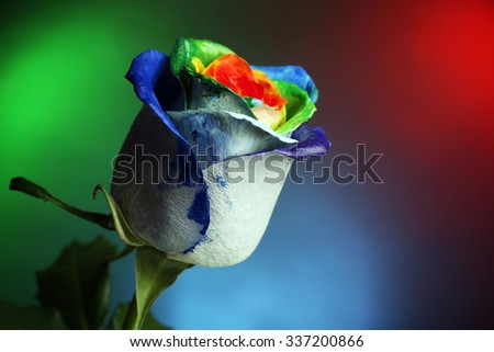 Beautiful painted rose on colourful background, close up