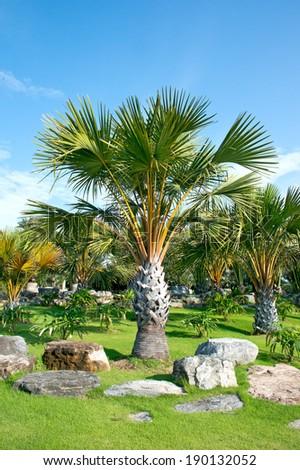 Beautiful palm garden. - stock photo